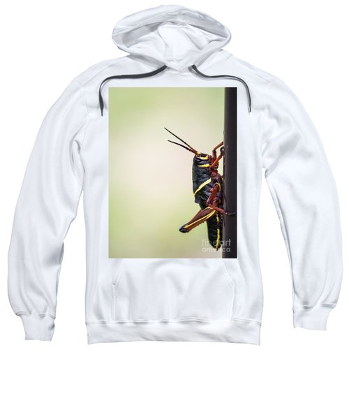 Giant Eastern Lubber Grasshopper Sweatshirt by Edward Fielding