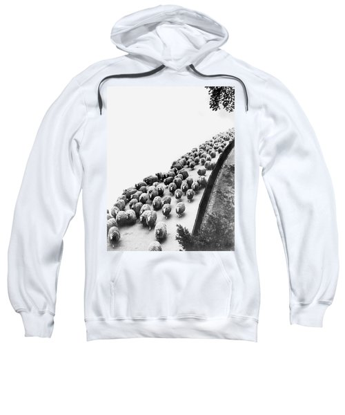 Hyde Park Sheep Flock Sweatshirt by Underwood Archives