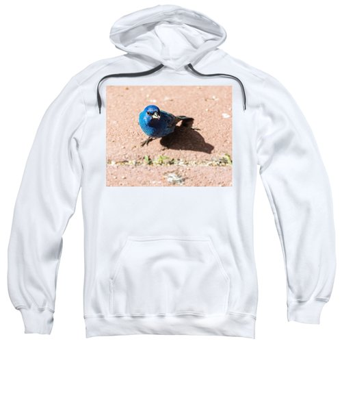 Indigo Bunting Sweatshirt by Jon Woodhams