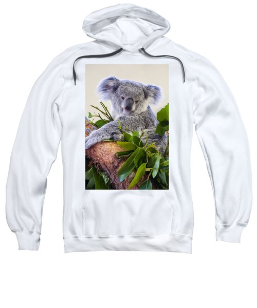 Koala On Top Of A Tree Sweatshirt by Chris Flees