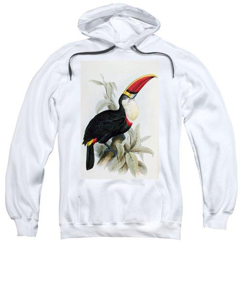 Red-billed Toucan Sweatshirt by Edward Lear