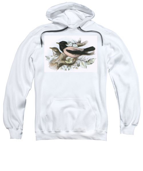 Rose Coloured Starling Sweatshirt by English School
