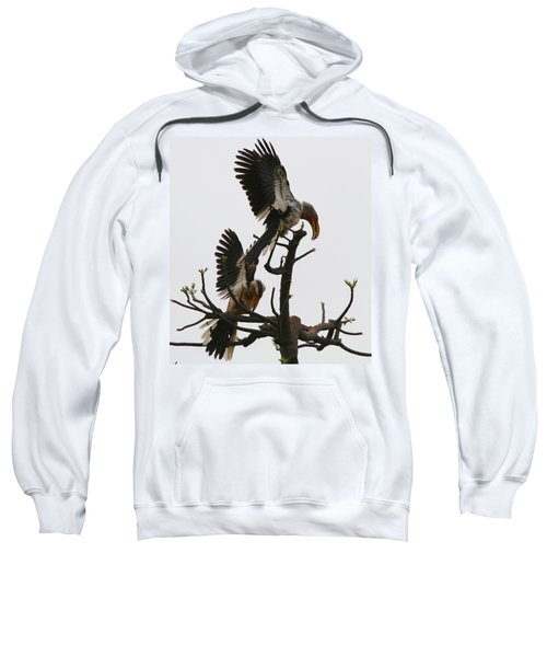 Hornbill Courtship Sweatshirt by Bruce J Robinson