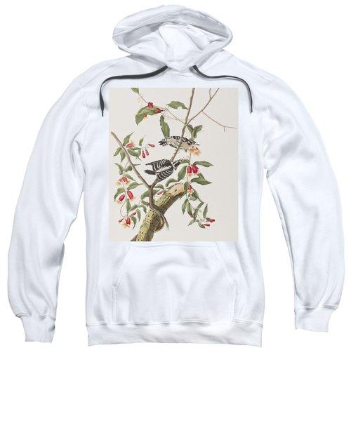 Downy Woodpecker Sweatshirt by John James Audubon