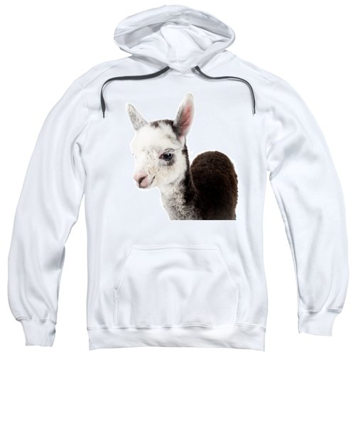 Adorable Baby Alpaca Cuteness Sweatshirt by TC Morgan