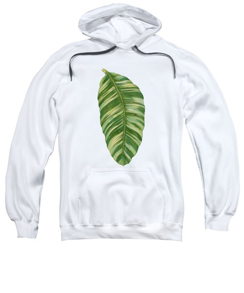 Rainforest Resort - Tropical Leaves Elephant's Ear Philodendron Banana Leaf Sweatshirt by Audrey Jeanne Roberts