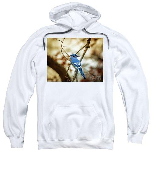 Blue Jay Sweatshirt by Robert Frederick
