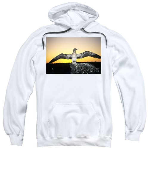 Booby At Sunset Sweatshirt by Dave Fleetham - Printscapes