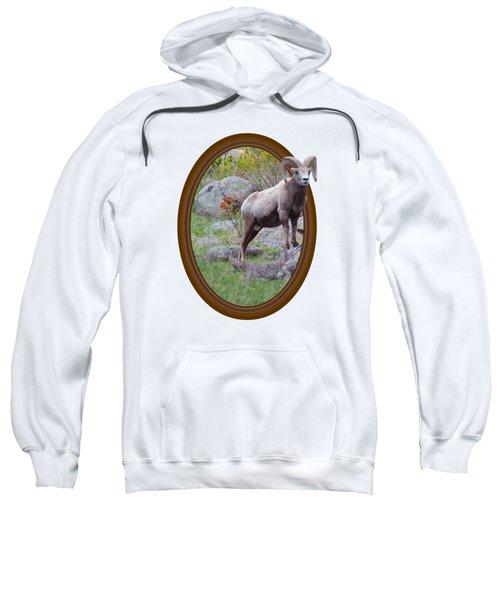 Colorado Bighorn Sweatshirt by Shane Bechler