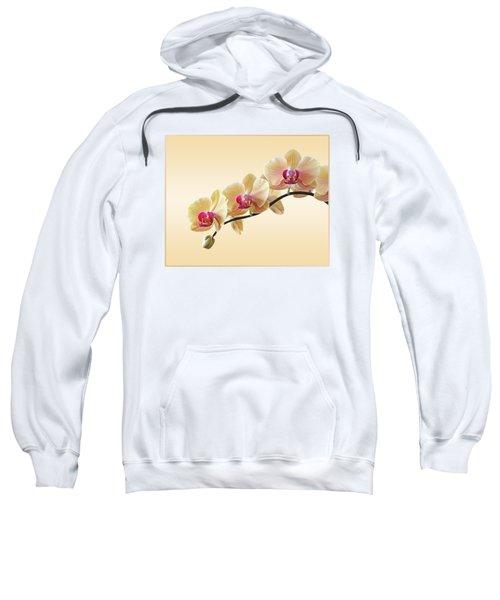 Cream Delight Sweatshirt by Gill Billington