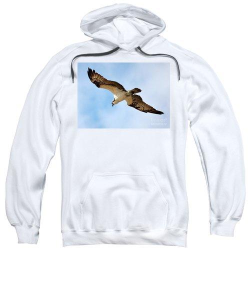 Hunter Osprey Sweatshirt by Carol Groenen