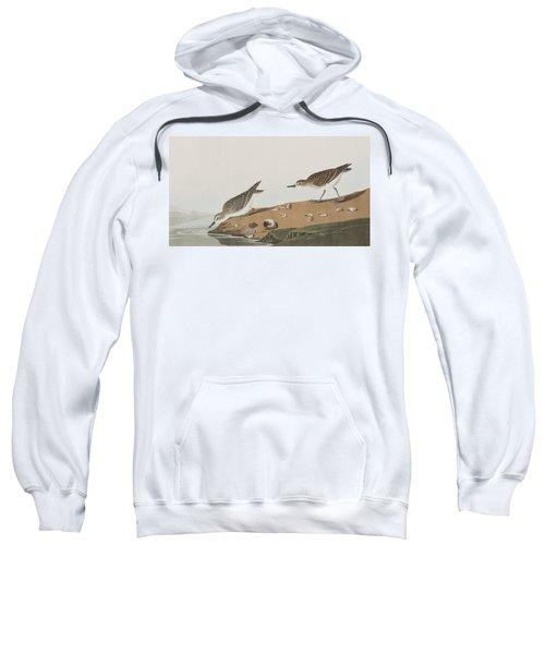 Semipalmated Sandpiper Sweatshirt by John James Audubon