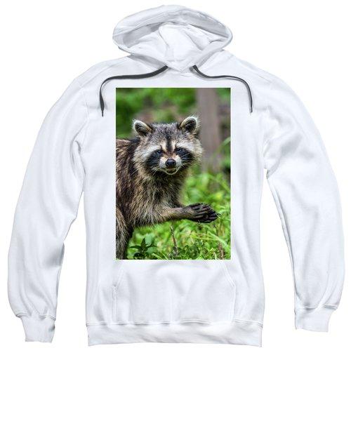 Smiling Raccoon Sweatshirt by Paul Freidlund
