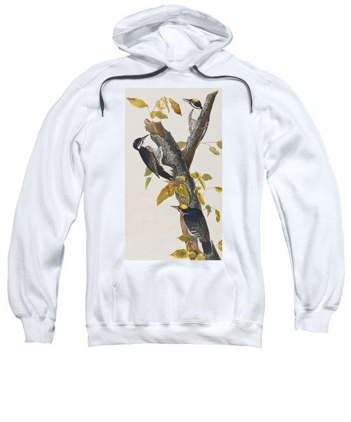 Three Toed Woodpecker Sweatshirt by John James Audubon