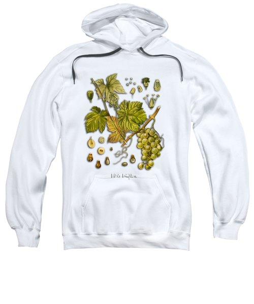 Vitis Vinifera Sweatshirt by Justyna JBJart