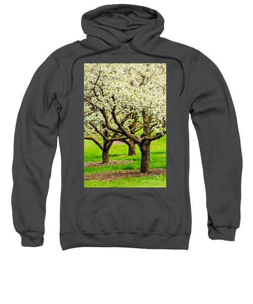 Apple Blossoms Sweatshirt by Joe Mamer