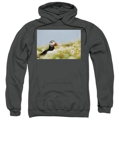 Atlantic Puffin In Breeding Plumage Sweatshirt by Sebastian Kennerknecht