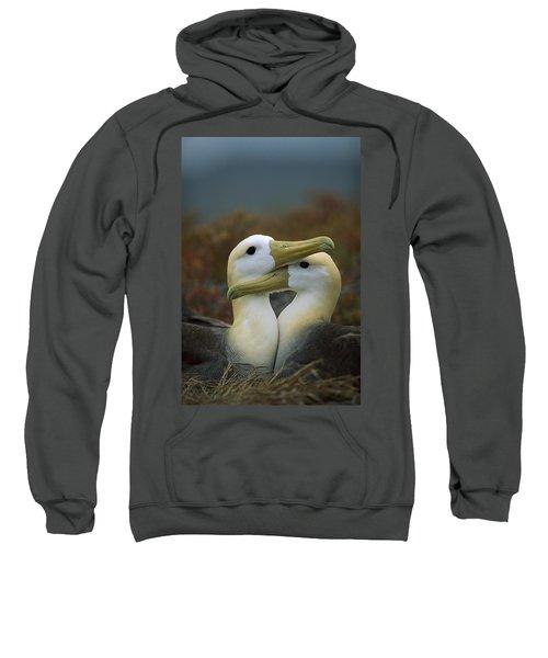 Waved Albatross Pair Bonding Galapagos Sweatshirt by Tui De Roy