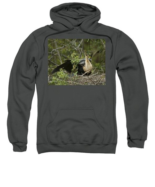 Anhinga Mama Sweatshirt by Phill Doherty