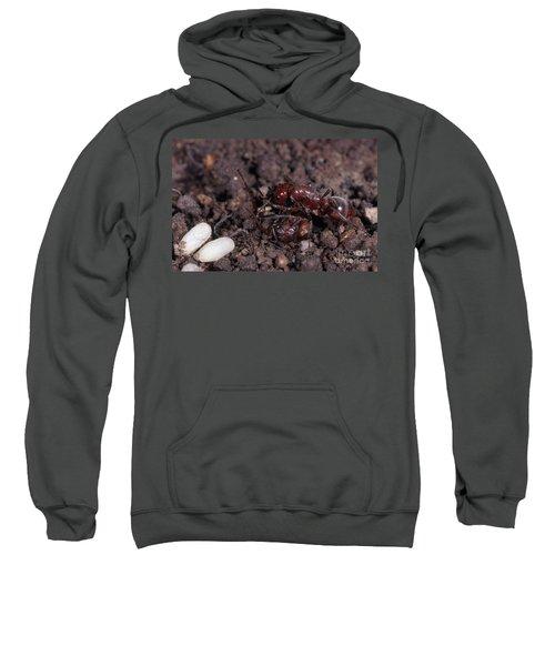 Ant Queen Fight Sweatshirt by Gregory G. Dimijian, M.D.