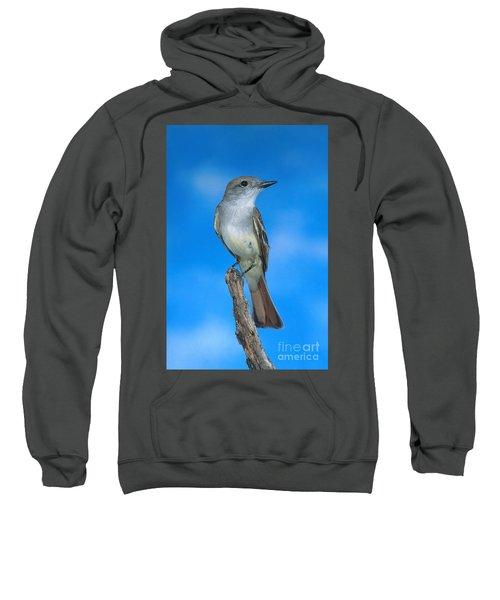 Ash-throated Flycatcher Sweatshirt by Anthony Mercieca