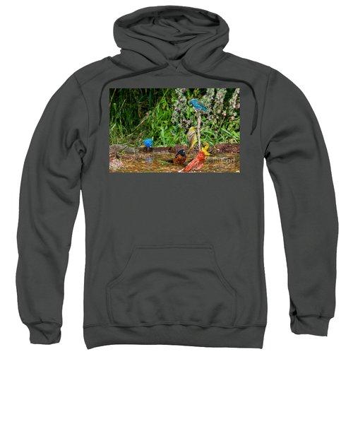 Birds Bathing Sweatshirt by Anthony Mercieca