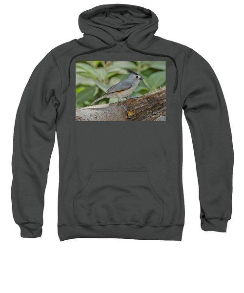 Black-crested Titmouse Sweatshirt by Anthony Mercieca