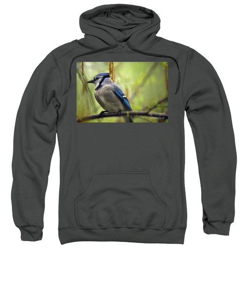Blue Jay On A Misty Spring Day Sweatshirt by Lois Bryan
