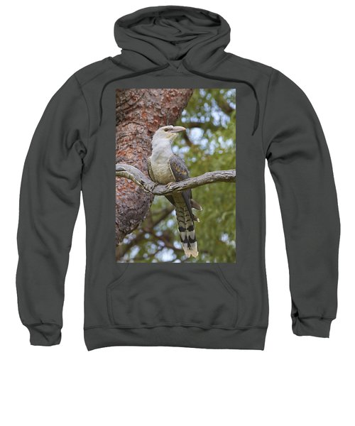 Channel-billed Cuckoo Fledgling Sweatshirt by Martin Willis