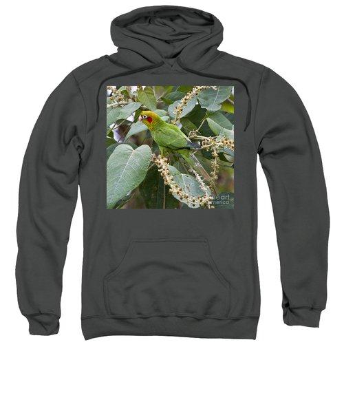 Chiriqui Conure 2 Sweatshirt by Heiko Koehrer-Wagner