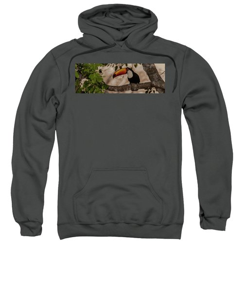 Close-up Of Tocu Toucan Ramphastos Toco Sweatshirt by Panoramic Images