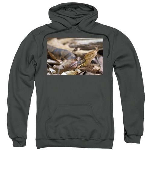 Copperhead In The Wild Sweatshirt by Betsy Knapp