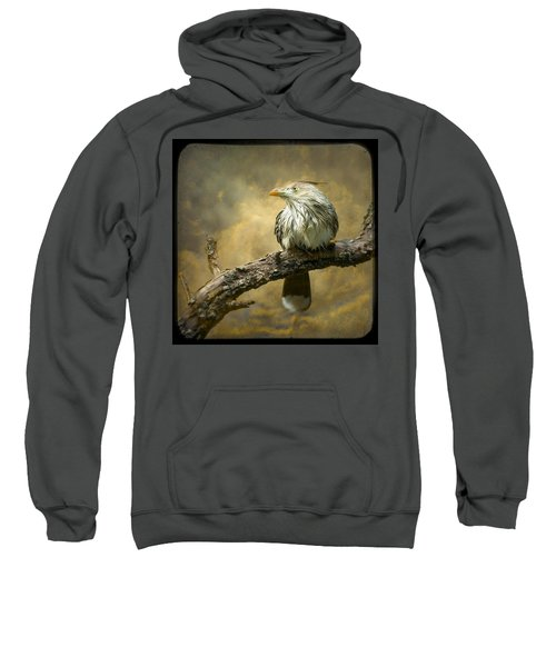 Exotic Bird - Guira Cuckoo Bird Sweatshirt by Gary Heller