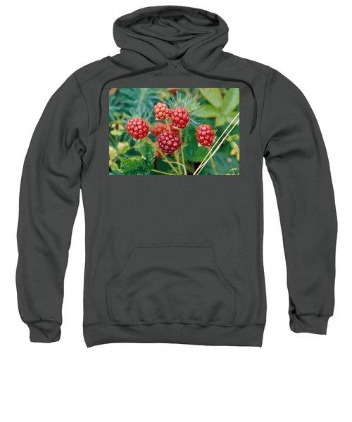 Highbush Blackberry Rubus Allegheniensis Grows Wild In Old Fields And At Roadsides Sweatshirt by Anonymous