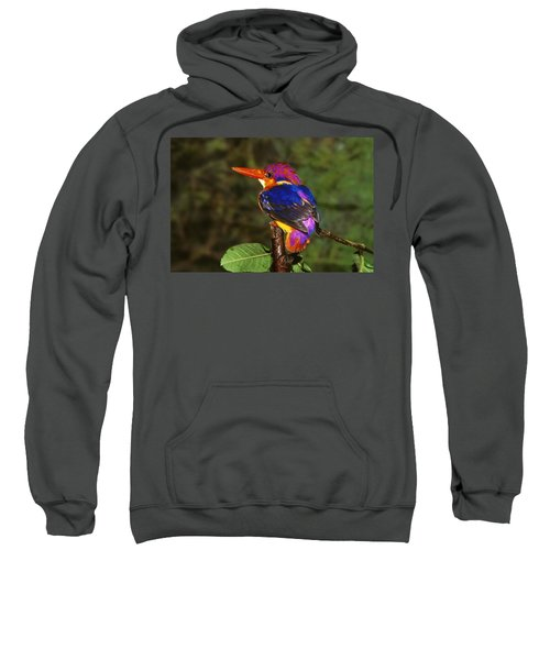 India Three Toed Kingfisher Sweatshirt by Anonymous