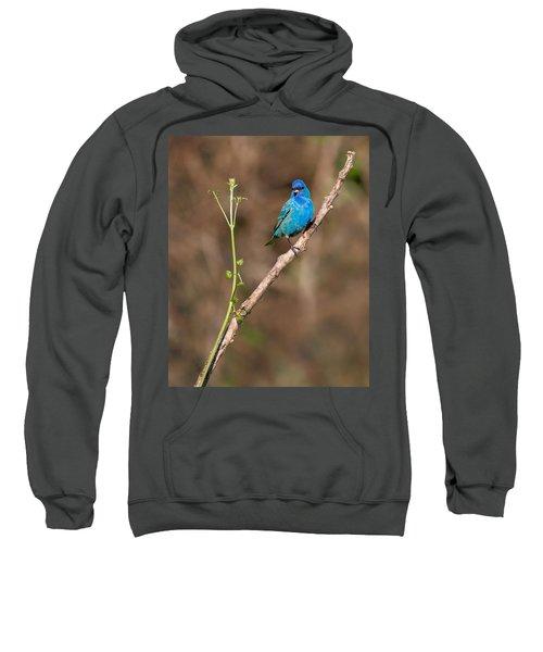 Indigo Bunting Portrait Sweatshirt by Bill Wakeley