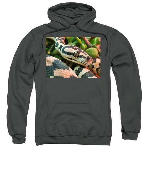 Jungle Python Sweatshirt by Kelly Jade King
