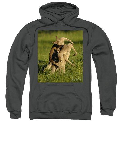 Kangaroos Taking A Bow Sweatshirt by Bob Christopher