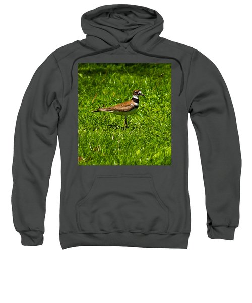 Killdeer Charadrius Vociferus 2 Sweatshirt by Howard Tenke