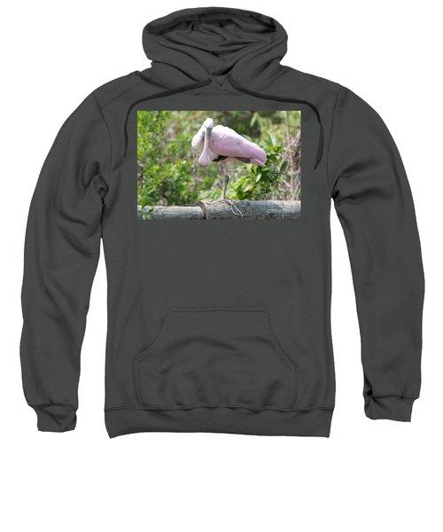 Light Pink Roseate Spoonbill Sweatshirt by Carol Groenen