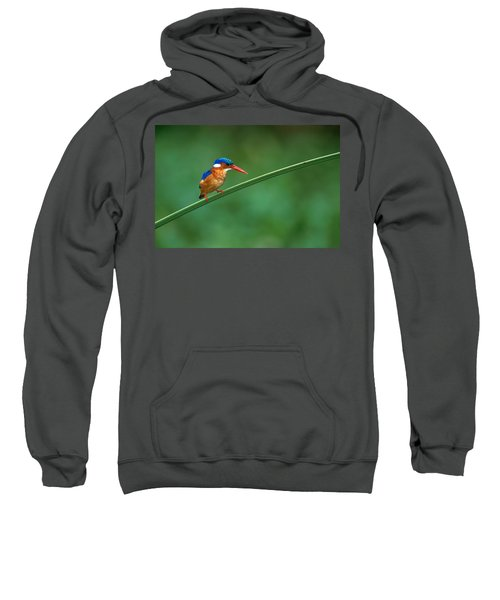 Malachite Kingfisher Tanzania Africa Sweatshirt by Panoramic Images
