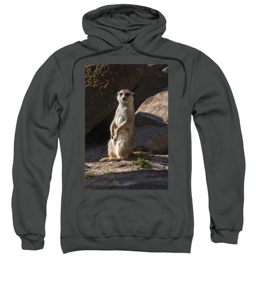 Meerkat Looking Forward Sweatshirt by Chris Flees