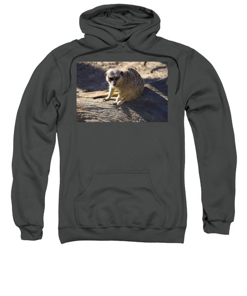 Meerkat Resting On A Rock Sweatshirt by Chris Flees