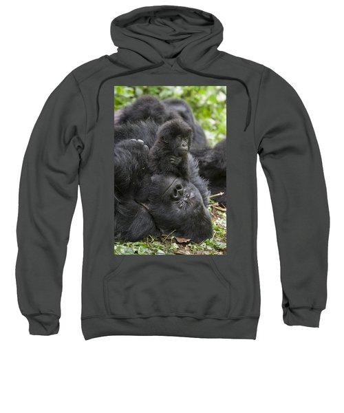 Mountain Gorilla Baby Playing Sweatshirt by Suzi  Eszterhas