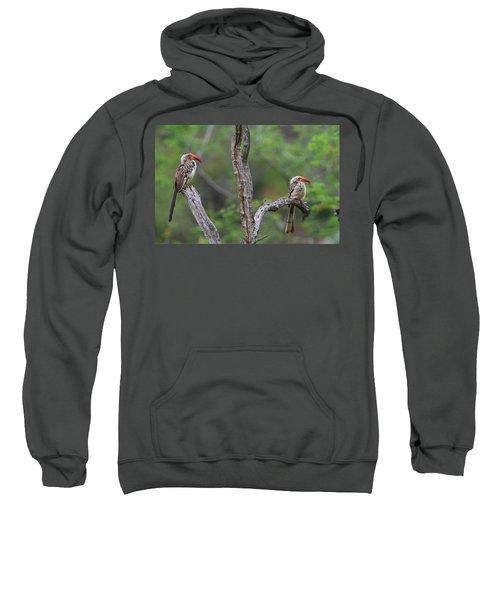 Red-billed Hornbills Sweatshirt by Bruce J Robinson
