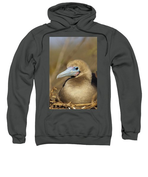 Red-footed Booby Incubating Eggs Sweatshirt by Tui De Roy