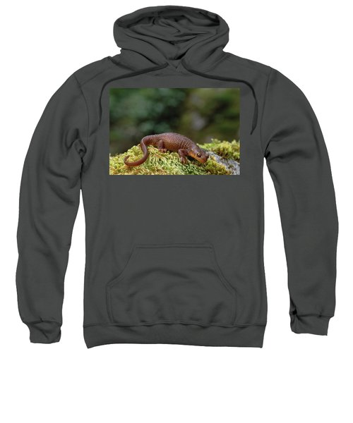Rough-skinned Newt Oregon Sweatshirt by Gerry Ellis