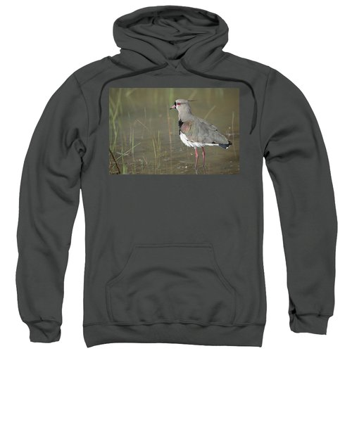 Southern Lapwing In Marshland Pantanal Sweatshirt by Tui De Roy