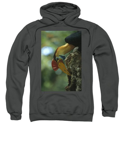 Sulawesi Red-knobbed Hornbill Male Sweatshirt by Tui De Roy