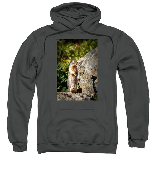 The Marmot Sweatshirt by Robert Bales